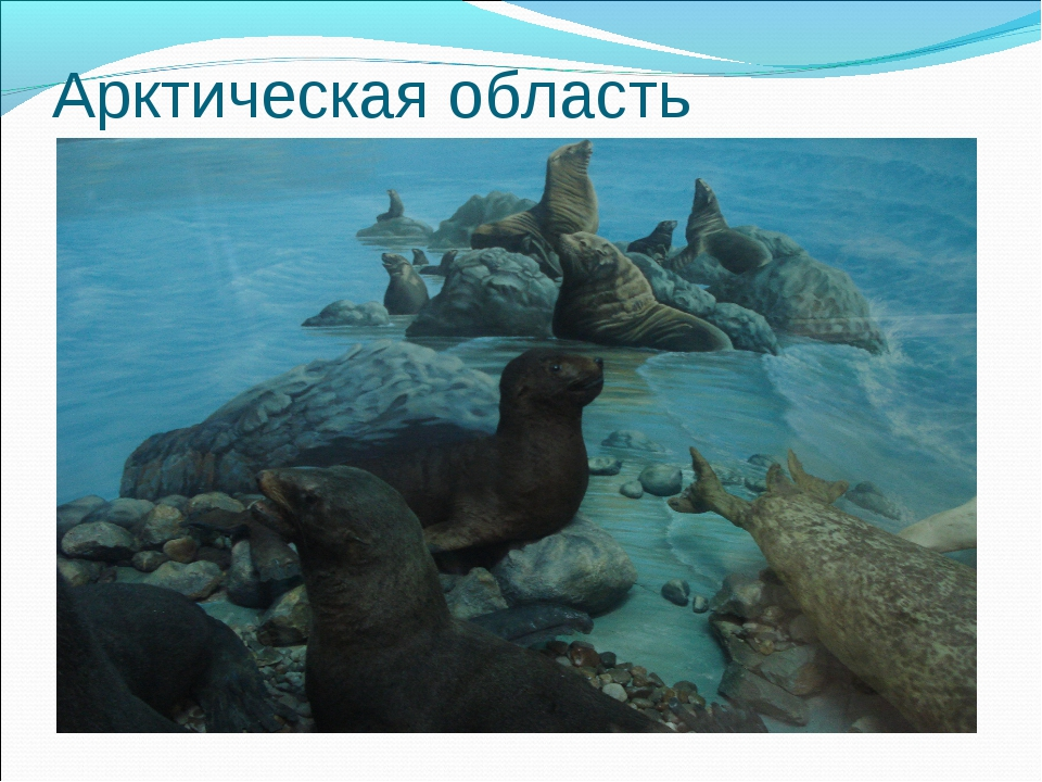 Арктическая область