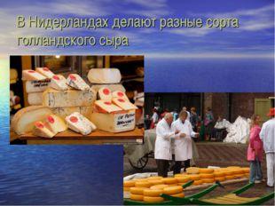 В Нидерландах делают разные сорта голландского сыра