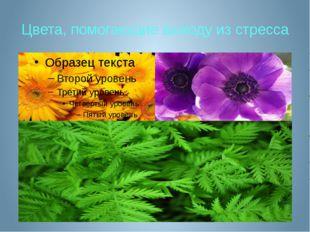 Цвета, помогающие выходу из стресса