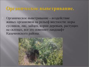 Органическое выветривание – воздействие живых организмов на рельеф местности: