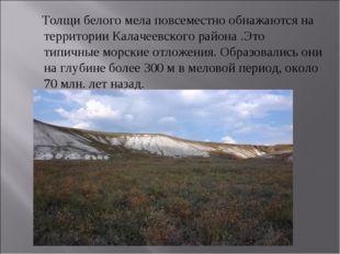 Толщи белого мела повсеместно обнажаются на территории Калачеевского района