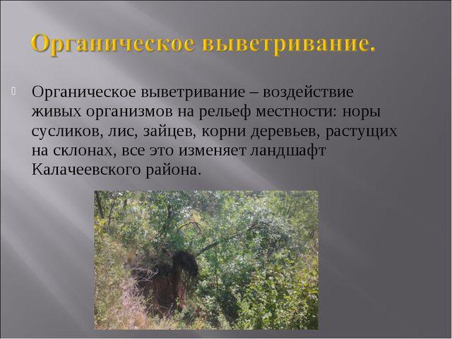 Органическое выветривание – воздействие живых организмов на рельеф местности:...
