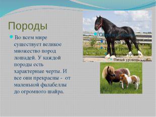 Породы Во всем мире существует великое множество пород лошадей. У каждой поро