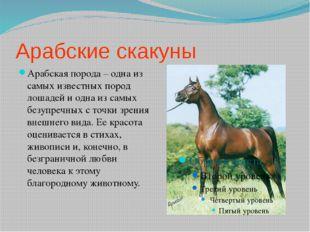 Арабские скакуны Арабская порода – одна из самых известных пород лошадей и од