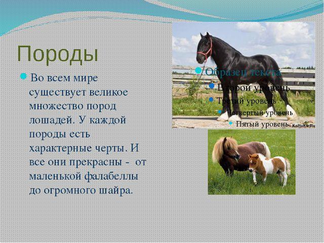 Породы Во всем мире существует великое множество пород лошадей. У каждой поро...