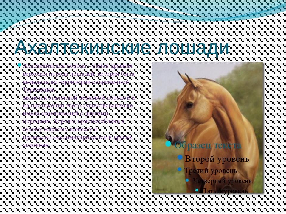 Ахалтекинские лошади Ахалтекинская порода – самая древняя верховая порода лош...