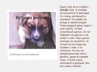 Еще у нас есть собака – Алтай. Ему 6 ноября исполнилось 6 месяцев. Он очень а