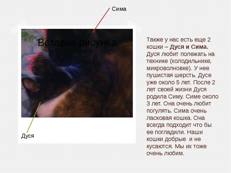 Также у нас есть еще 2 кошки – Дуся и Сима. Дуся любит полежать на технике (х...