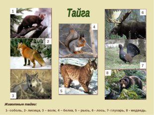Животные тайги: 1- соболь, 2- лисица, 3 – волк, 4 – белка, 5 – рысь, 6 - лос