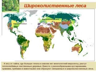 Широколиственные леса Широколиственные леса Широколиственные леса К югу от т