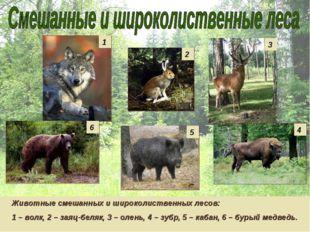 Животные смешанных и широколиственных лесов: 1 – волк, 2 – заяц-беляк, 3 – ол