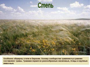 Особенно обширны степи в Евразии. Основу сообщества травянистых равнин состав