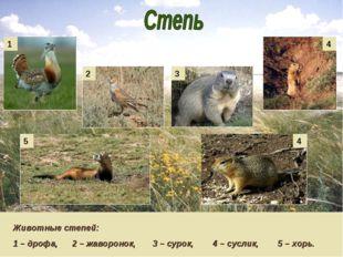 Животные степей: 1 – дрофа, 2 – жаворонок, 3 – сурок, 4 – суслик, 5 – хорь. 1