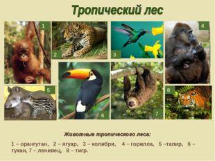 Животные тропического леса: 1 – орангутан, 2 – ягуар, 3 – колибри, 4 – горилл