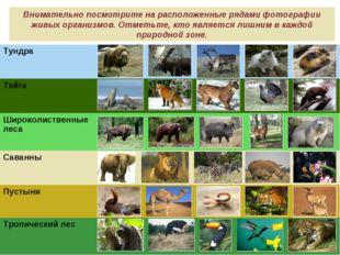 Внимательно посмотрите на расположенные рядами фотографии живых организмов. О