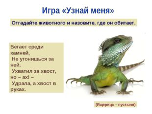 Отгадайте животного и назовите, где он обитает. Бегает среди камней, Не угони