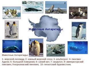 Животные Антарктиды: 1- морской леопард; 2- южный морской слон; 3- альбатрос: