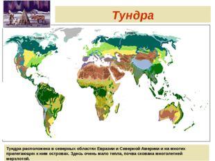 Тундра Тундра Тундра Тундра расположена в северных областях Евразии и Северн