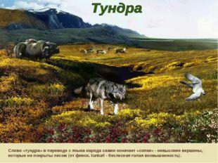 Слово «тундра» в переводе с языка народа саами означает «сопки» - невысокие в