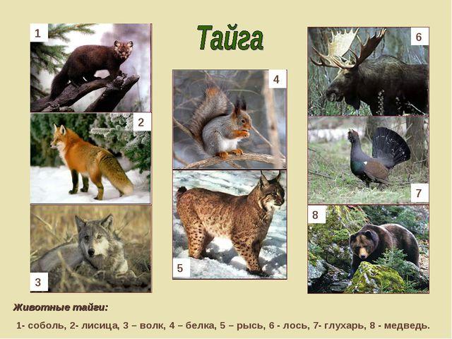 Животные тайги: 1- соболь, 2- лисица, 3 – волк, 4 – белка, 5 – рысь, 6 - лос...