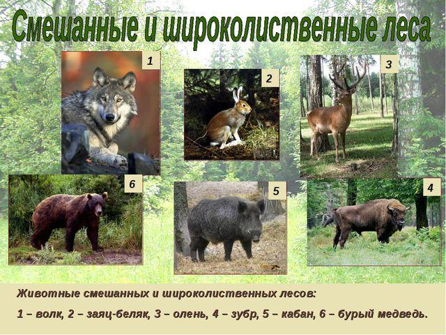 Животные смешанных и широколиственных лесов: 1 – волк, 2 – заяц-беляк, 3 – ол...