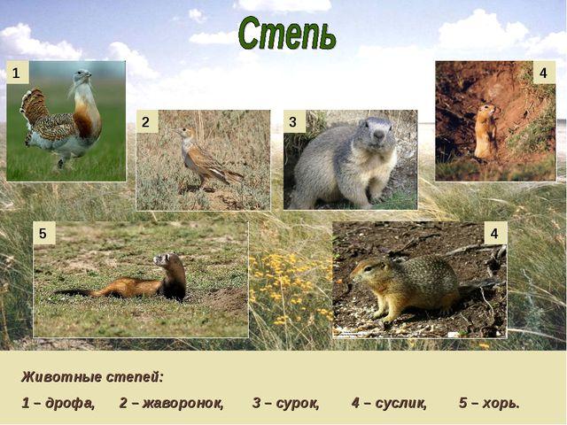Животные степей: 1 – дрофа, 2 – жаворонок, 3 – сурок, 4 – суслик, 5 – хорь. 1...