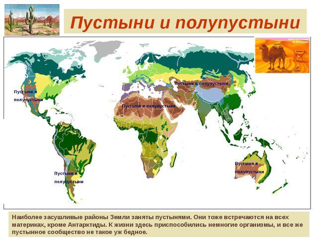 Пустыни и полупустыни Наиболее засушливые районы Земли заняты пустынями. Они...