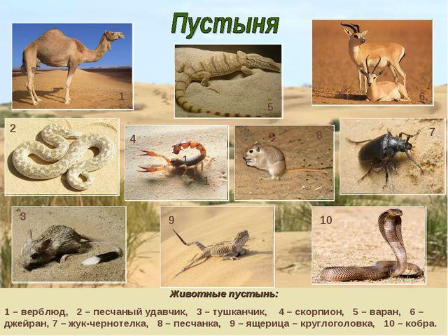 Животные пустынь: 1 – верблюд, 2 – песчаный удавчик, 3 – тушканчик, 4 – скорп...