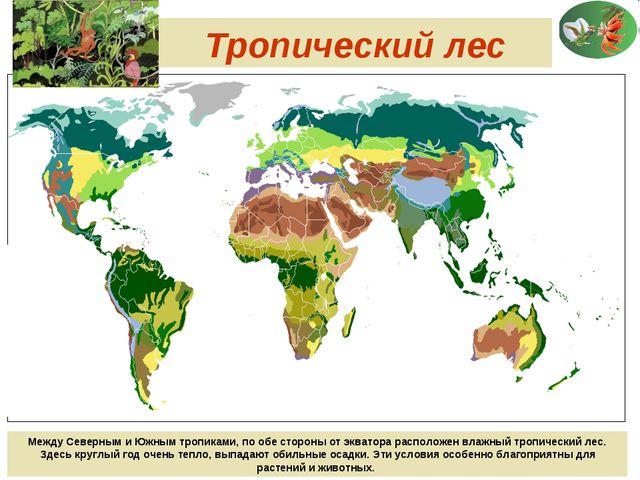 Тропический лес Между Северным и Южным тропиками, по обе стороны от экватора...