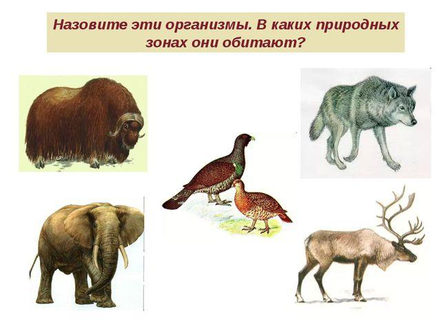 Назовите эти организмы. В каких природных зонах они обитают?