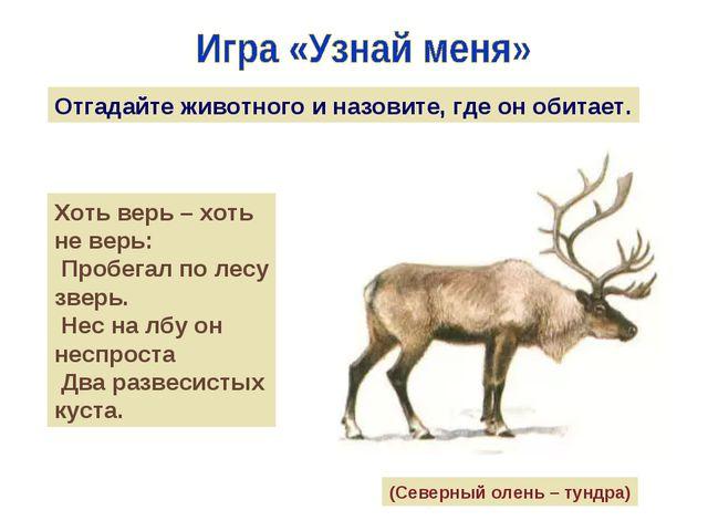 Отгадайте животного и назовите, где он обитает. Хоть верь – хоть не верь: Про...