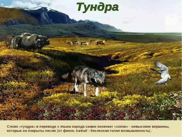 Слово «тундра» в переводе с языка народа саами означает «сопки» - невысокие в...