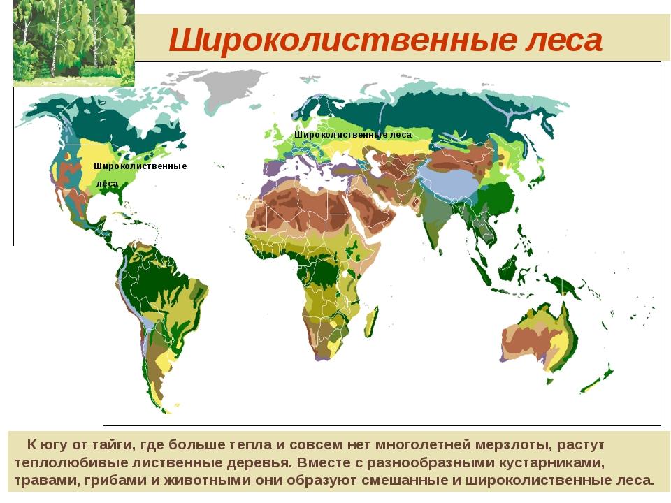 Широколиственные леса Широколиственные леса Широколиственные леса К югу от т...