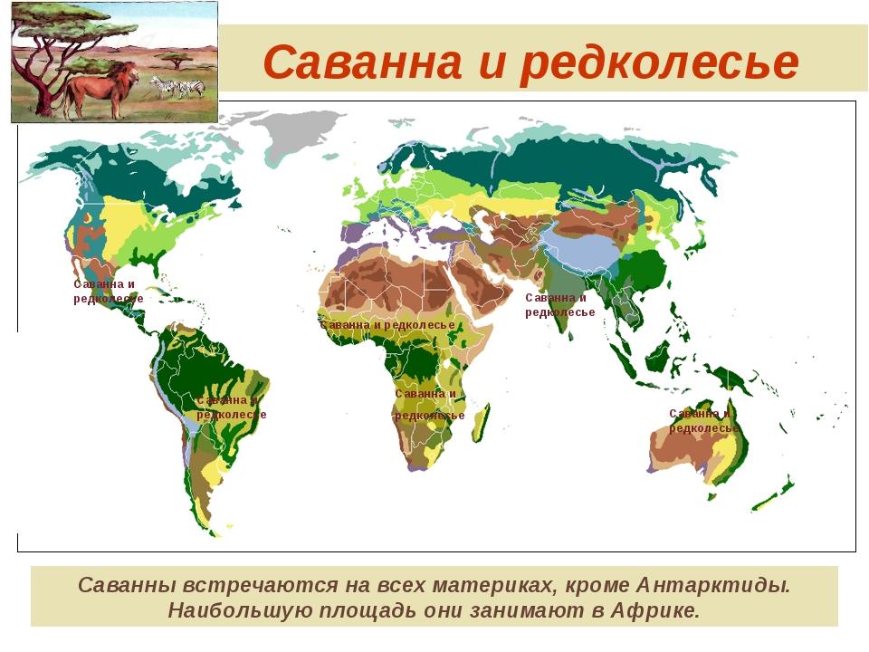 Саванна и редколесье Саванны встречаются на всех материках, кроме Антарктиды....