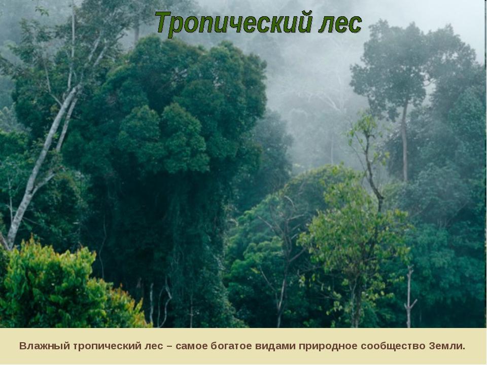Влажный тропический лес – самое богатое видами природное сообщество Земли.