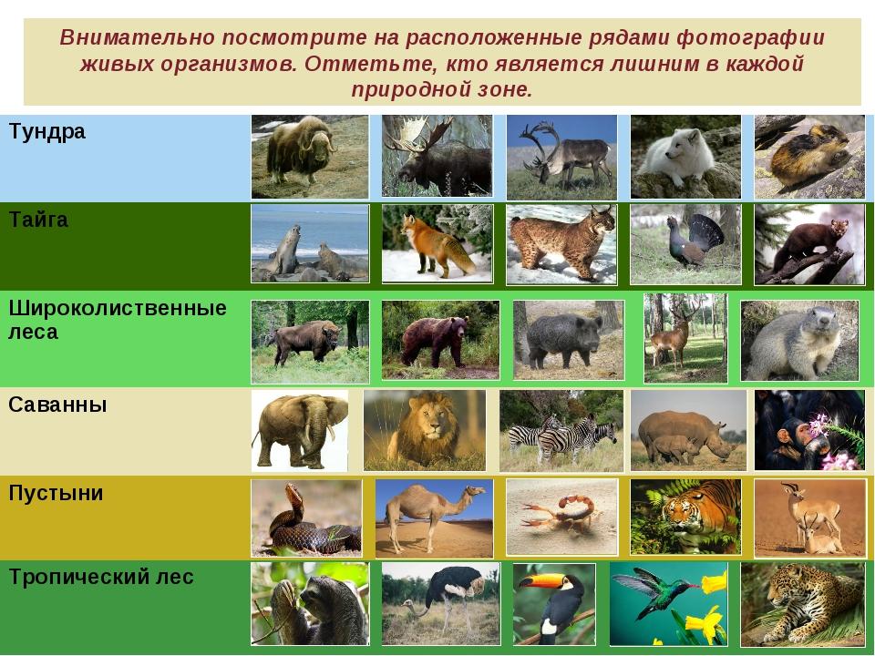 Внимательно посмотрите на расположенные рядами фотографии живых организмов. О...