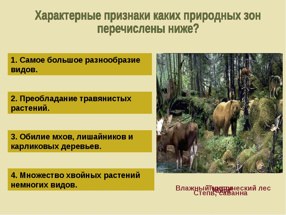 1. Самое большое разнообразие видов. 2. Преобладание травянистых растений. 3....