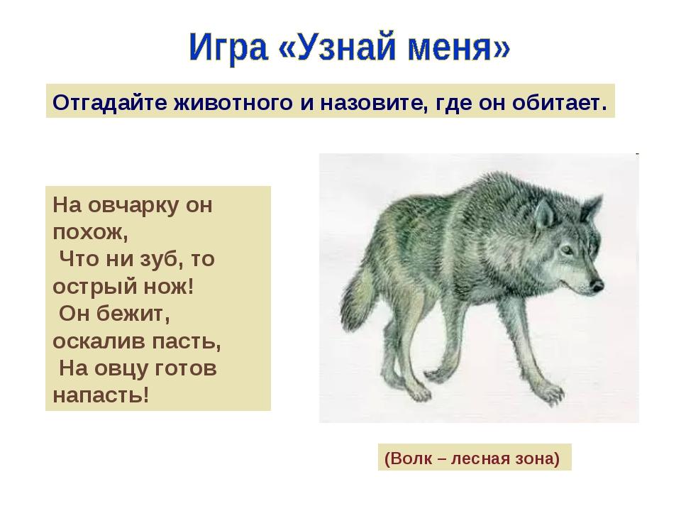 Отгадайте животного и назовите, где он обитает. На овчарку он похож, Что ни з...