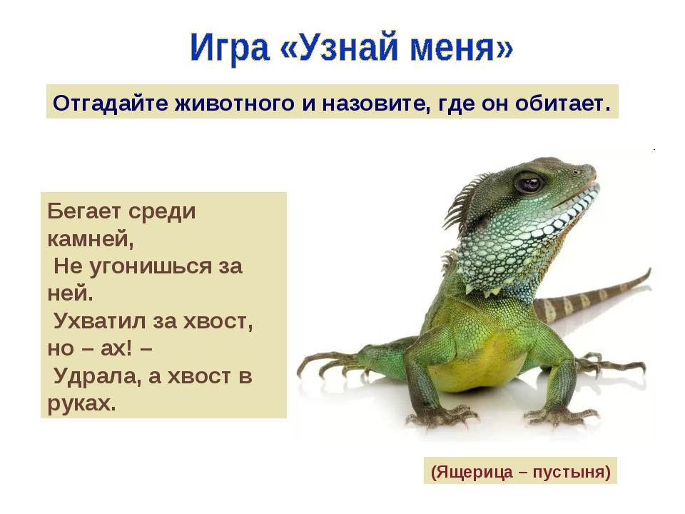 Отгадайте животного и назовите, где он обитает. Бегает среди камней, Не угони...