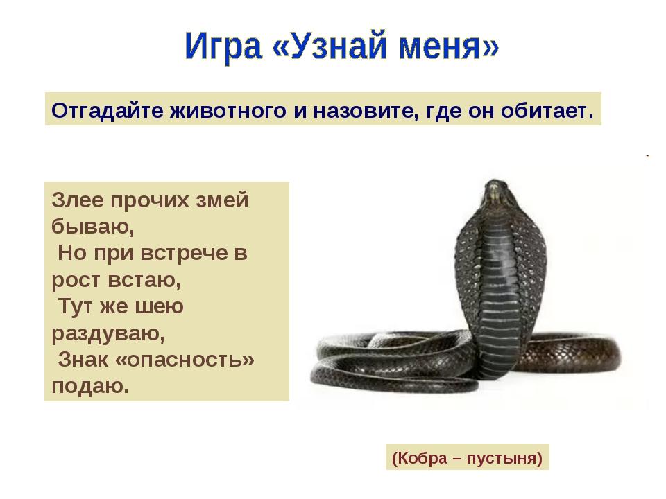 Отгадайте животного и назовите, где он обитает. Злее прочих змей бываю, Но пр...
