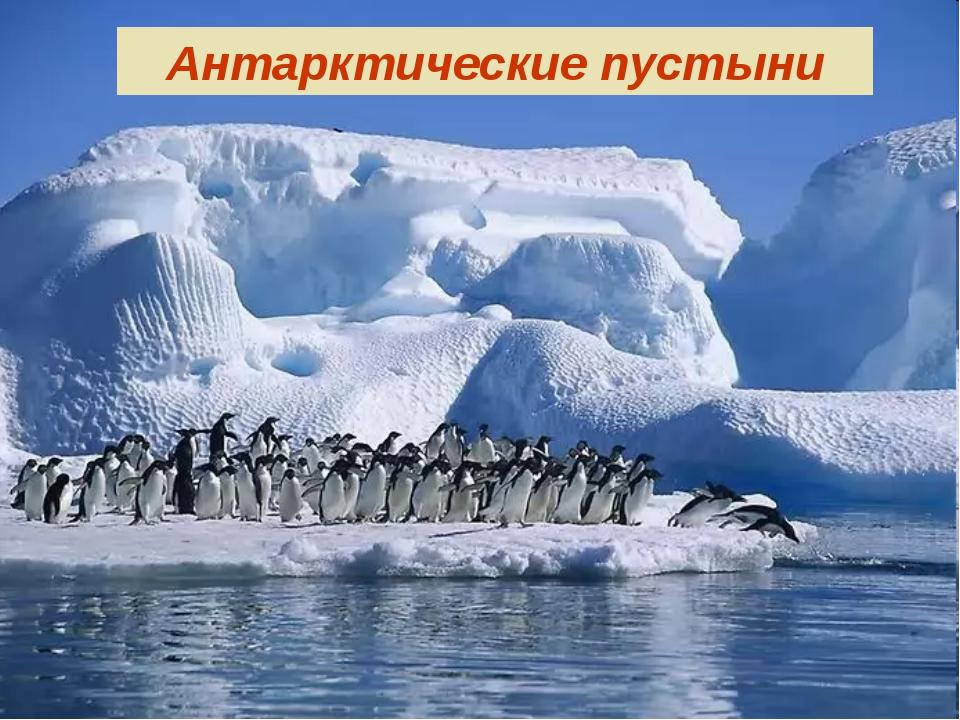 Антарктические пустыни