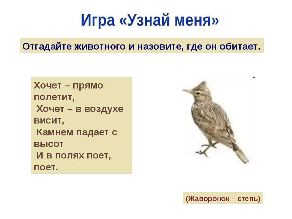 Отгадайте животного и назовите, где он обитает. Хочет – прямо полетит, Хочет...