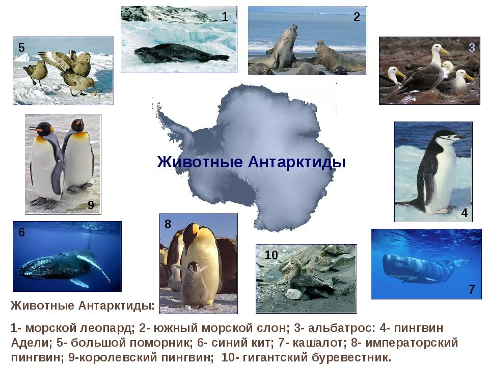 Животные Антарктиды: 1- морской леопард; 2- южный морской слон; 3- альбатрос:...