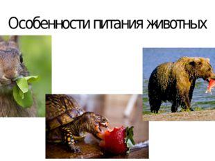 Особенности питания животных