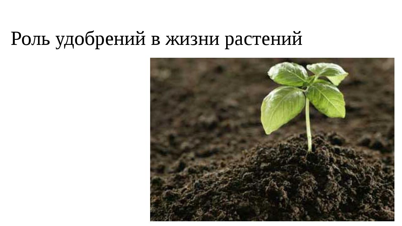 Роль удобрений в жизни растений