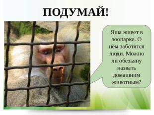 ПОДУМАЙ! Яша живет в зоопарке. О нём заботятся люди. Можно ли обезьяну назват