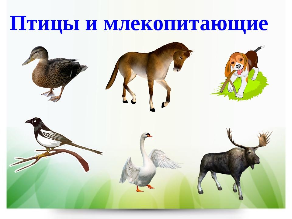 Птицы и млекопитающие