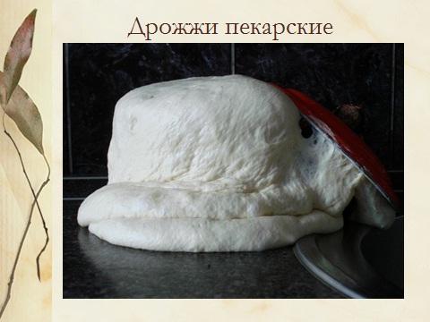C:\Documents and Settings\kab30.GIMN7\Рабочий стол\Максим\drozhzhi.jpg