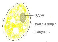C:\Documents and Settings\kab30.GIMN7\Рабочий стол\Максим\3.png
