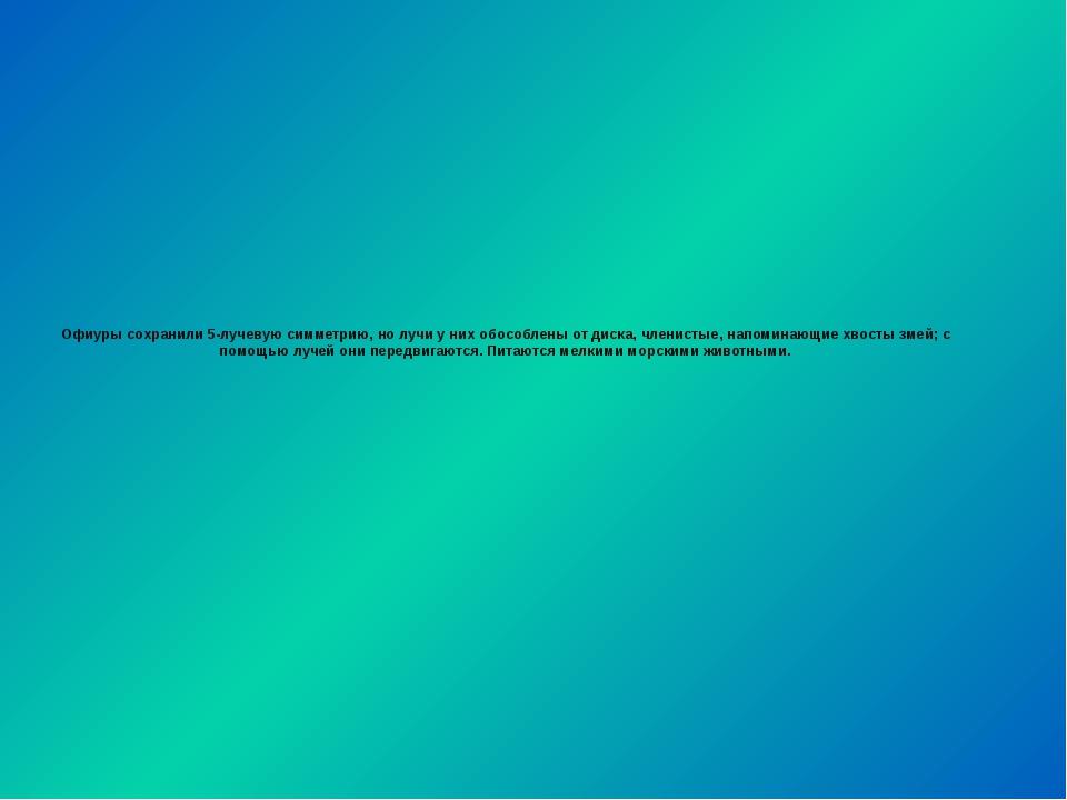 Офиуры сохранили 5-лучевую симметрию, но лучи у них обособлены от диска, член...